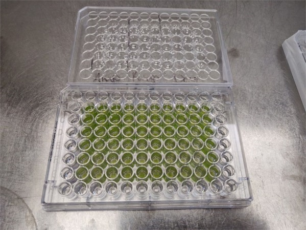 Microalgae – multitalented organisms for a livable future?