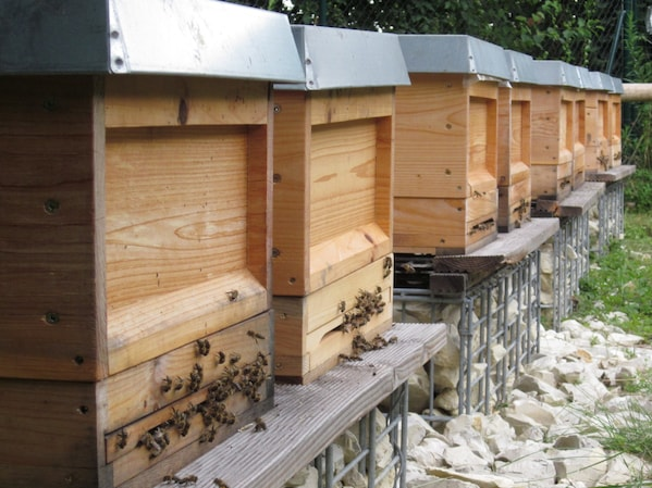 Bee Care – A Pillar of the Future